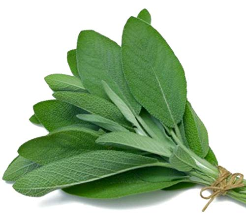 Broadleaf Sage Herb Seed by Zellajake Many Sizes Easy Grow #88 by 6SHTN (Image #1)