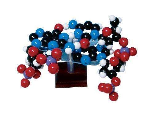 Molymod W19754 128 Piece Two Layer DNA Molecular Model Kit