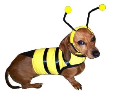 Dog In Bee Costume (Dog Bumble Bee Costume - XL)