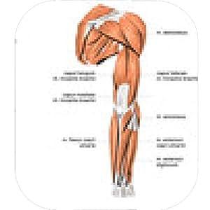 alfombrilla de ratón Los músculos # 2 - ronda - 20cm