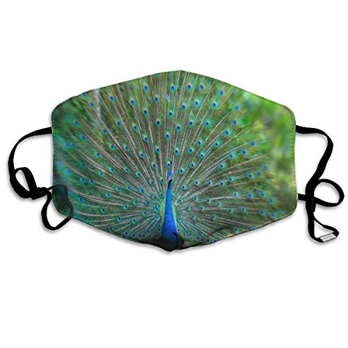 Anti Dust Mask Peacock - Dream Meaning Surgical Mask Winter Healthy Washable For Unisex Halloween
