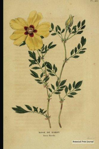 Botanical Print Journal: rosa hardii, 6