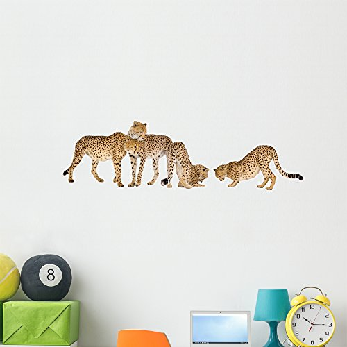 cheetah wall decals - 5