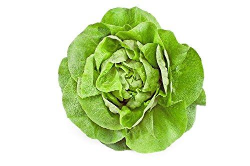 Lettuce Greenhouse - Greenhouse lettuce Anielka - seeds