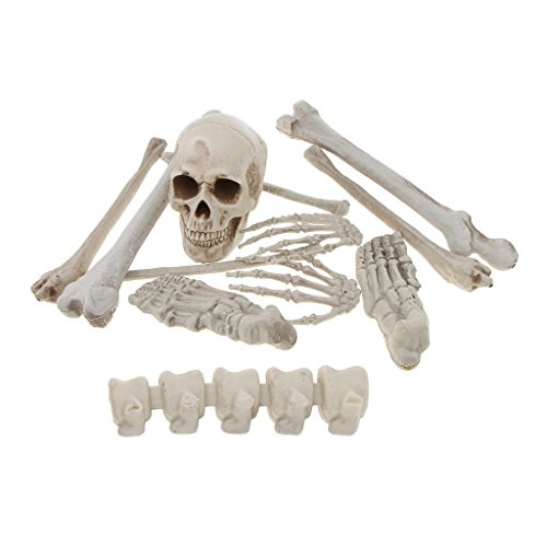 SM SunniMix Realistic Horrific Skeleton Bones Skull Hands Feet Legs Bones 12pcs/set Halloween Decor Props by SM SunniMix
