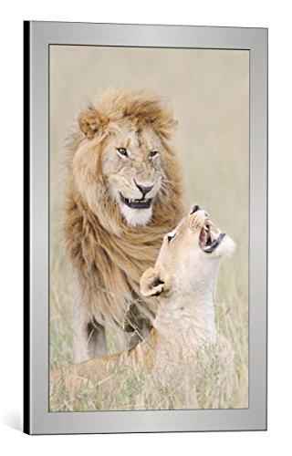 Kunst für Alle Framed Art Print: Muriel Vekemans Lion lover ...