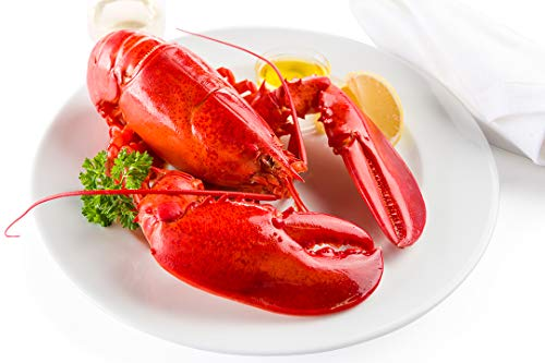 - Maine Lobster Now: 6 Pack of 1.5 lb Live Maine Lobster