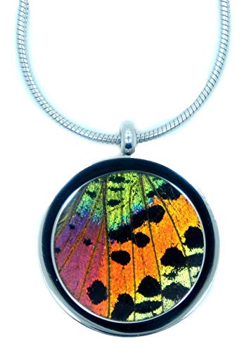 Real Sunset Moth Necklace - Butterfly Wing Pendant - Insect Jewelry