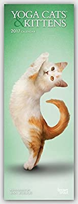 Yoga Cats & Kittens 2017 Slimline Calendar