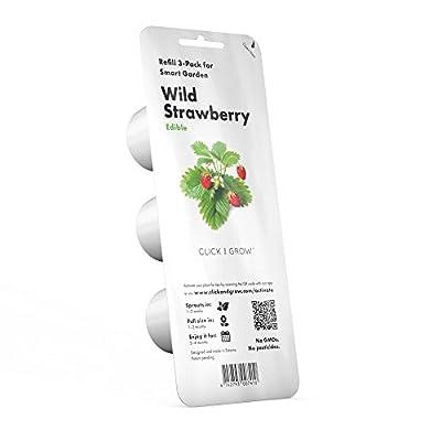 Wild Strawberry Plant Pods
