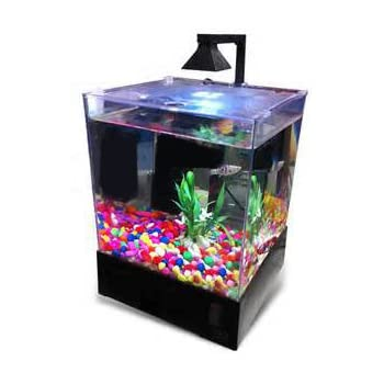 Amazoncom PERFECT New Fish Tank Aquarium Home or Office Aqua