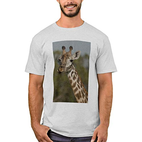 8685 Models - Zazzle Men's Basic T-Shirt, Masai Giraffe, Giraffa Camelopardalis T-Shirt, Ash M