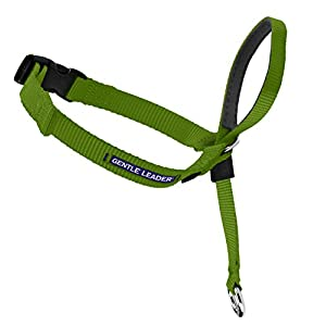 PetSafe Gentle Leader Head Collar with Training DVD, SMALL UP TO 25 LBS., APPLE GREEN