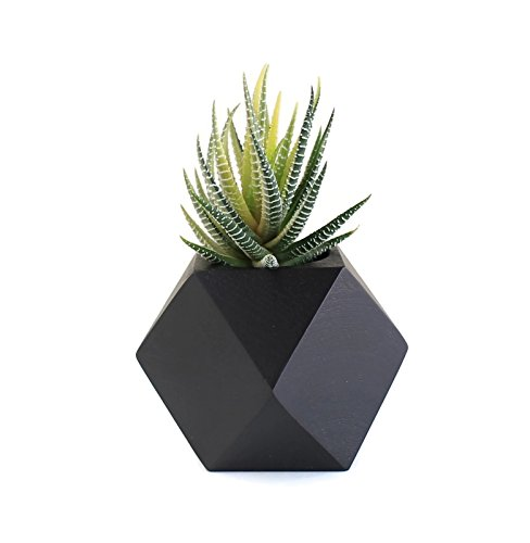 Teak Geometric Planter - Cubocta (Black) for Home Office Desk Garden Decoration