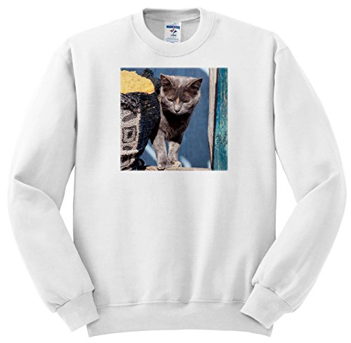 Price comparison product image 3dRose Danita Delimont - Cats - Cat and Sofa - Sweatshirts - Youth Sweatshirt XS(2-4) (SS_279252_9)