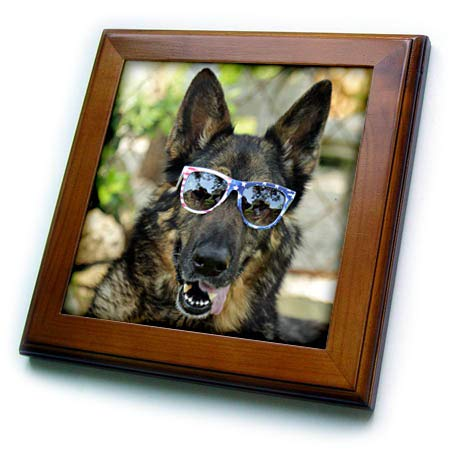 3dRose Stamp City - Animals - Photograph of a German Shepherd Wearing Patriotic Sunglasses. - 8x8 Framed Tile (ft_315569_1) ()