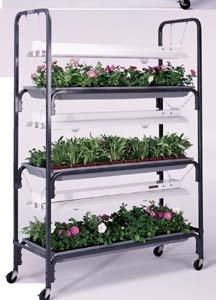 Jewel Plant Growing Tray by Jewel