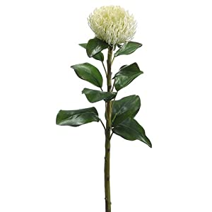 "28"" Needle Protea Spray White (Pack of 12) 58"