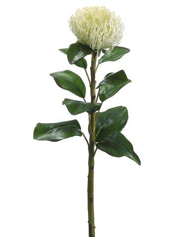 28-Needle-Protea-Spray-White-Pack-of-12