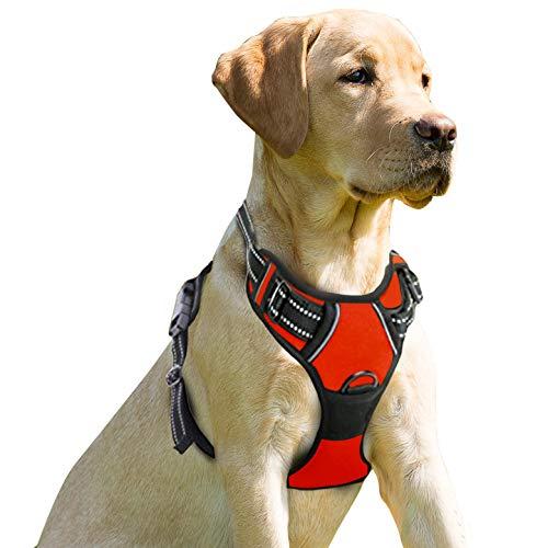 Buy harness dog large