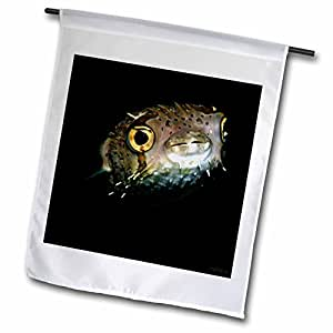 VWPics Underwater Reefs - Balloonfish, Diodon holocanthus, at night, Dumaguete, Negros Island, Philippines - 18 x 27 inch Garden Flag (fl_46368_2)