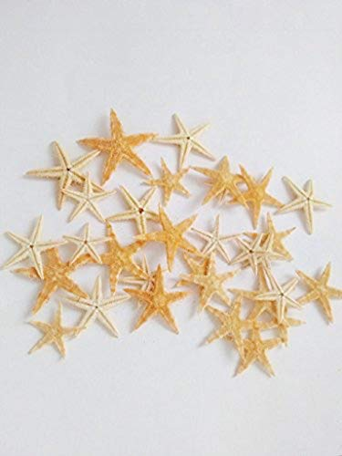 100 Pcs. Natural Starfish, Mini Sea Stars Perfect for Beach, Ocean, Wedding or Party Decorations and Crafts - Note Small Size Range of 0.25