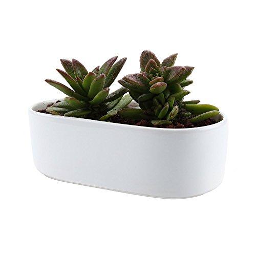 JynXos 6.5 Inch Ceramic White Modern Oval Design succulent Plant Pot/Cactus Plant Pot Flower Pot/Container/Planter