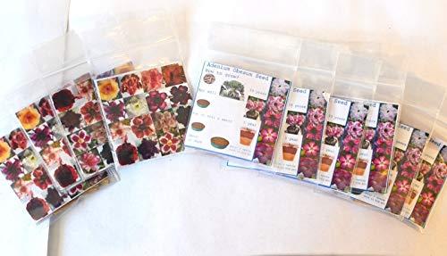 MULTI-PETAL DESERT ROSE ADENIUM SEEDS mixed colors 100 pcs by - Desert Rose Plant Seeds