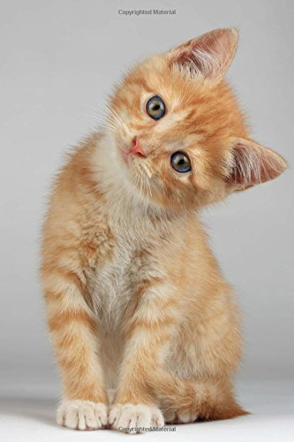 Such a Sweet Orange Kitten Cat Journal: 150 Page Lined Notebook/Diary pdf