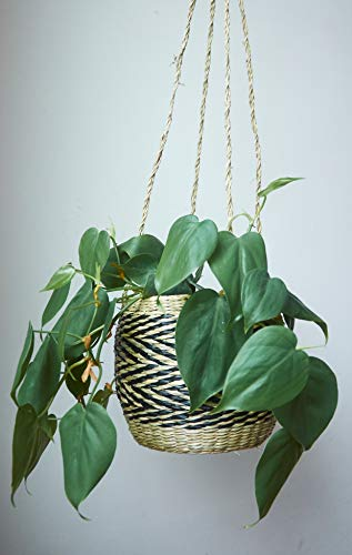 Natural Seagrass Hanging Planter - Handmade Indoor Flower Pot Holder - for Succulents, Air Plants and Small Cacti - Black and Natural Zigzag Pattern