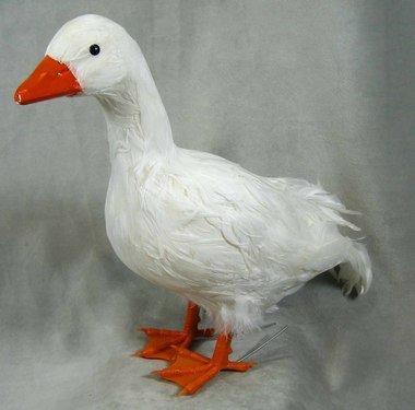 Birds White Duck - 3