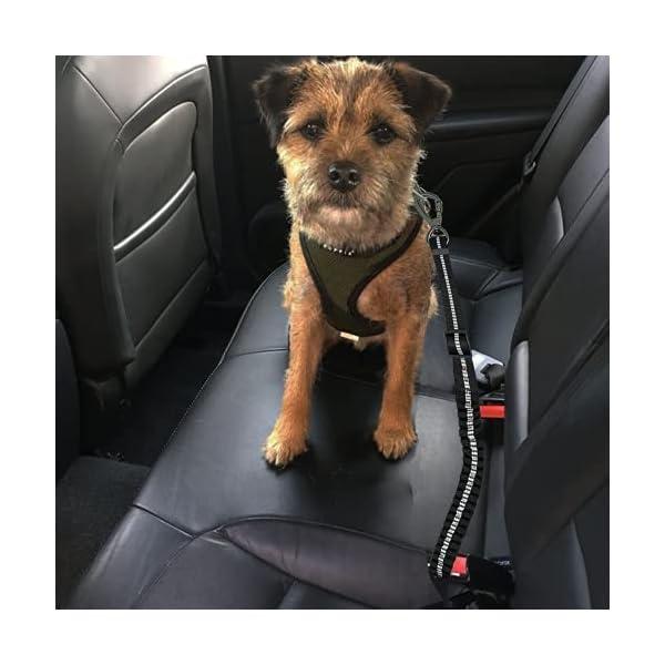 41lyGOPO2FS Hunde Sicherheitsgurt, Universeller Sicherheitsgeschirr für Hunde mit Verbessertem Karabiner, Verstellbarer Kabelbaum…