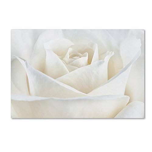 Cora Rose - Pure White Rose by Cora Niele, 22x32-Inch Canvas Wall Art