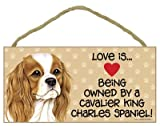 Love is being owned by a Cavalier King Charles Spaniel 5