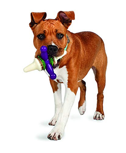 PetSafe Busy Buddy Jack Dog Toy,  Chew Toy with Treats, Large (Best Dogs For Busy People)