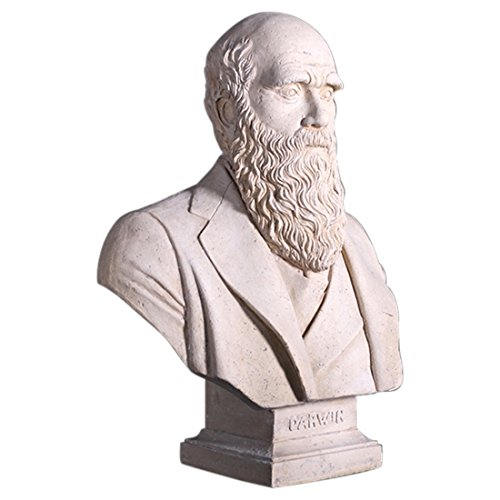 Bust of Darwin Statue or Sculpture Made of Faux Stone Marble Finish Vintage (Faux Marble Statues)
