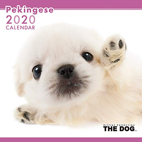 The Dog Wall Calendar 2020 Pekingese (Images Of Cutest Puppies In The World)