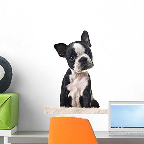 Wallmonkeys Boston Terrier Puppy Peel and Stick Wall Deca...