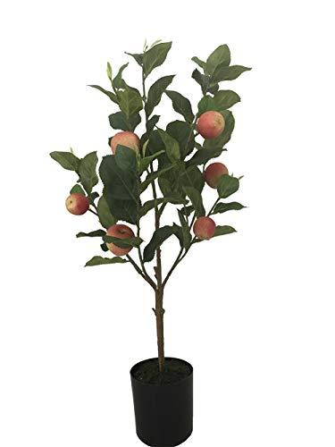 Potted Fruit Plants - 24