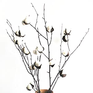 "Dongliflower Natural Cotton Ball Bolls with 25"" Birch Stem Twig Spray 1"
