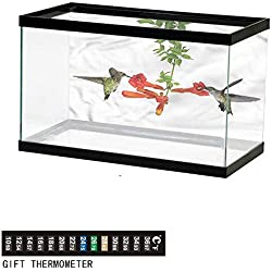 "bybyhome Fish Tank Backdrop Hummingbirds,Hummingbird Nectar Sip,Aquarium Background,60"" L X 24"" H(152x61cm) Thermometer Sticker"