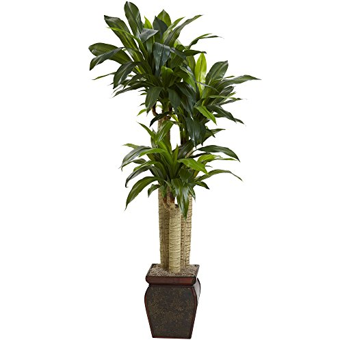 Nearly Natural 6670 Cornstalk Draceana with Vase, 4.5-Feet
