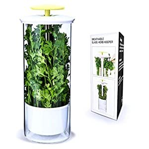 NOVART Premium Fresh Herb Keeper and Herb Storage Container – Glass Savor Preserver for Cilantro, Mint, Parsley…
