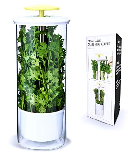 Premium Herb Keeper and Herb Storage Container - Extra Large Glass Design Keeps Greens and Vegetables Fresh for 2x Longer - By NOVART (Fresh Herb Container Garden)