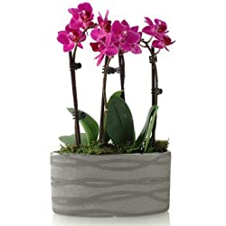 From You Flowers - Modern Magenta Orchid Planter for Valentine's Day