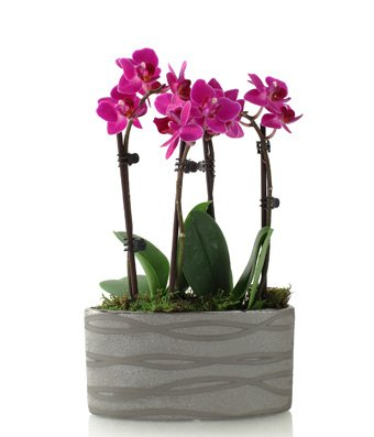 from-you-flowers-modern-magenta-orchid-planter