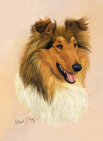 Collie Playing Cards - Art by Robert May by PP
