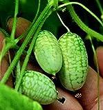 FD1064 Cucamelon Seeds Mini Watermelon Miniature Fruit Home Garden Plant x10pcs
