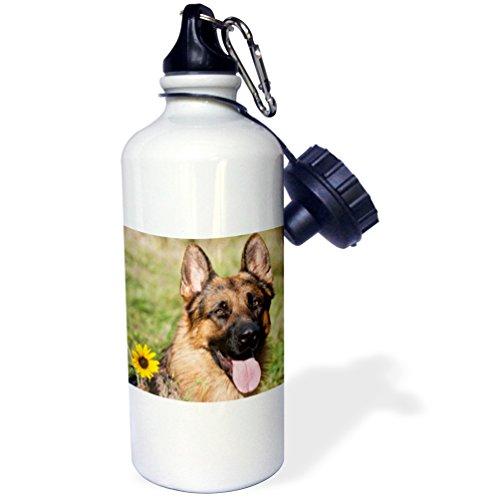 3dRose wb_145330_1 Portrait of German Shepherd dog US32 ZMU0080 Zandria Muench Beraldo Sports Water Bottle, 21 oz, (German Shepherd Bottle)