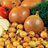 buy Park Seed Candy Hybrid Onion Seeds now, new 2020-2019 bestseller, review and Photo, best price $6.50